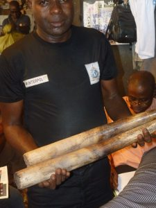 Interpol - Saisie de défenses ivoire