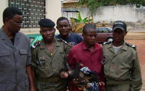 Arrestation d'un dealer de chimpanzé au Cameroun - Opération LAGA