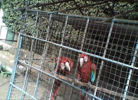 Investigations perroquets