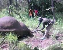 éléphant 2